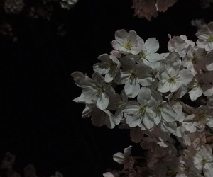 cherry blossom, dark, and night image