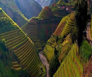 nature, Vietnam, and green image