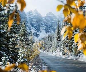 winter, landscape, and leaves image