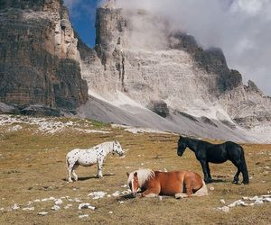 animals, beauty, and europe image