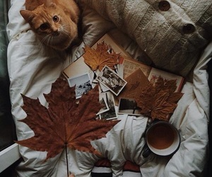 autumn, warm, and bed image