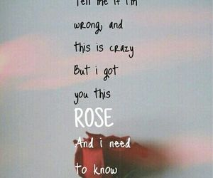 rose, wallpaper, and shawn mendes image