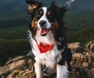 dog, animal, and mountains image