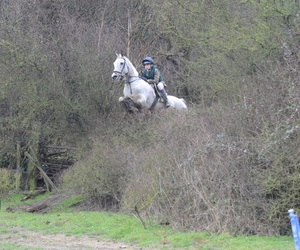 equestrian, horse, and grey image