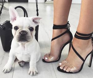 dog, shoes, and animal image