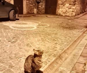 animal, beautiful, and street image
