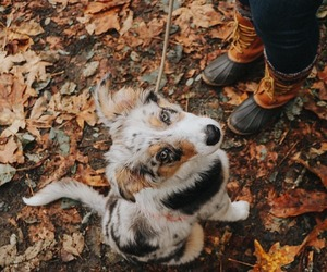 animal, autumn, and dog image