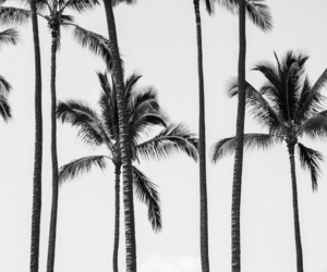 palm trees, pretty, and photography image