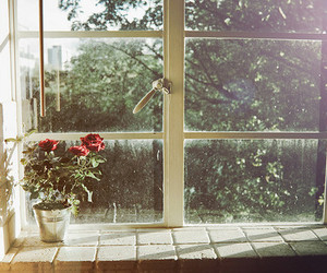 window, flowers, and rose image