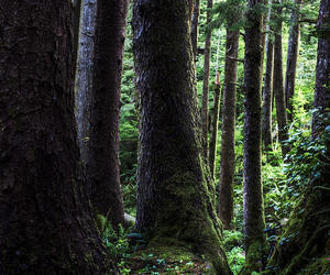 forest, nature, and pagan image