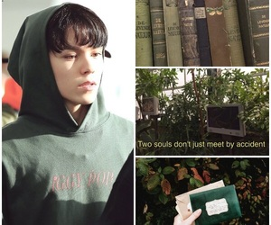 brown, moodboard, and plants image