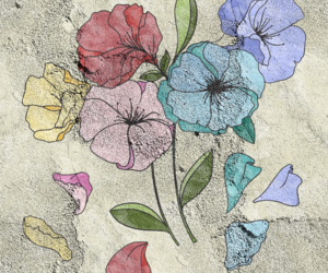 draws, flowers, and concrete floor image