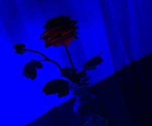 neon, night, and rose image