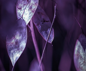 purple and nature photography image