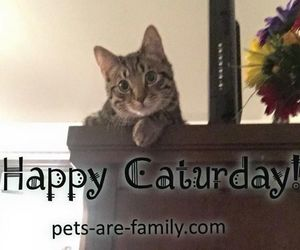 animals, caturday, and cats image