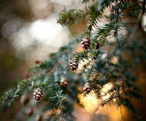 tree, christmas, and winter image