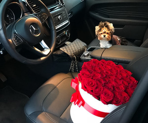 flowers, car, and dog image