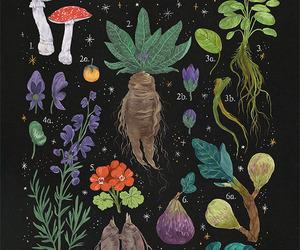 botany, herbalism, and illustration image