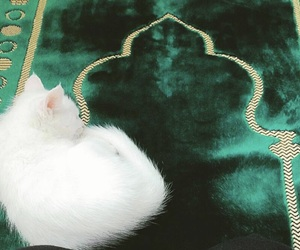 allah, animal, and cat image