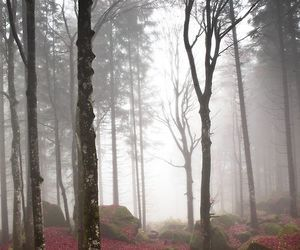 forest, nature, and misty image