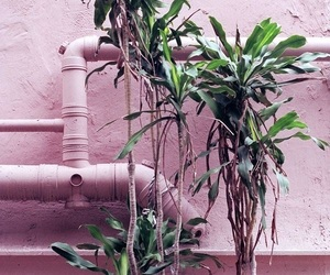 pink, plants, and pastel image