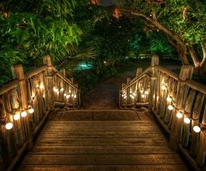 lights, night, and nature image