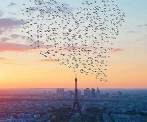 paris, bird, and heart image