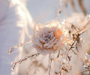 winter, rose, and flowers image