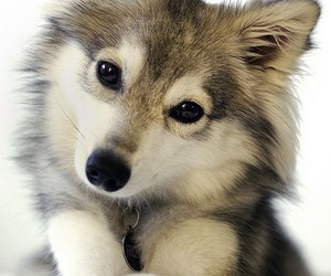 cute, dog, and animal image