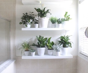 plants, white, and bathroom image