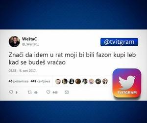 balkan, rat, and twitter image