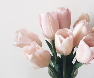 flora, pink, and tulips image