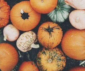 pumpkins and november image