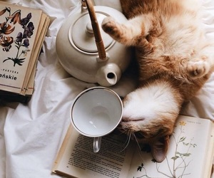 cat, book, and tea image