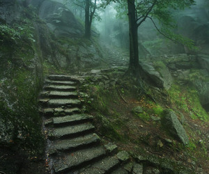forest, nature, and stairs image