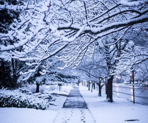 snow, winter, and cold image