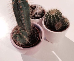 cactus, plants, and decoration image