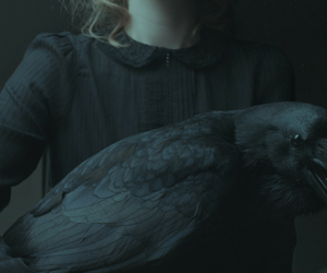 black, raven, and crow image