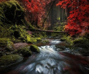 forest, nature photography, and red image