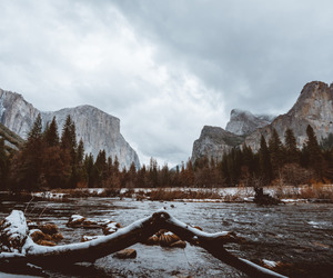 explore, forest, and mountains image