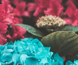 background, blue, and flores image