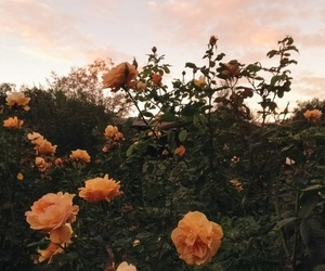 flowers, tumblr, and article image