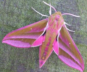 fuzzy, pink, and wings image