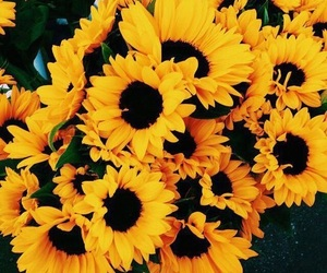 beauty, flowers, and yellow image