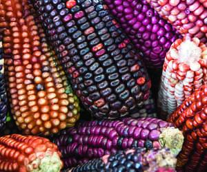 méxico and corn image