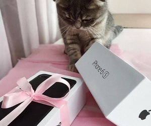cat, iphone, and pink image