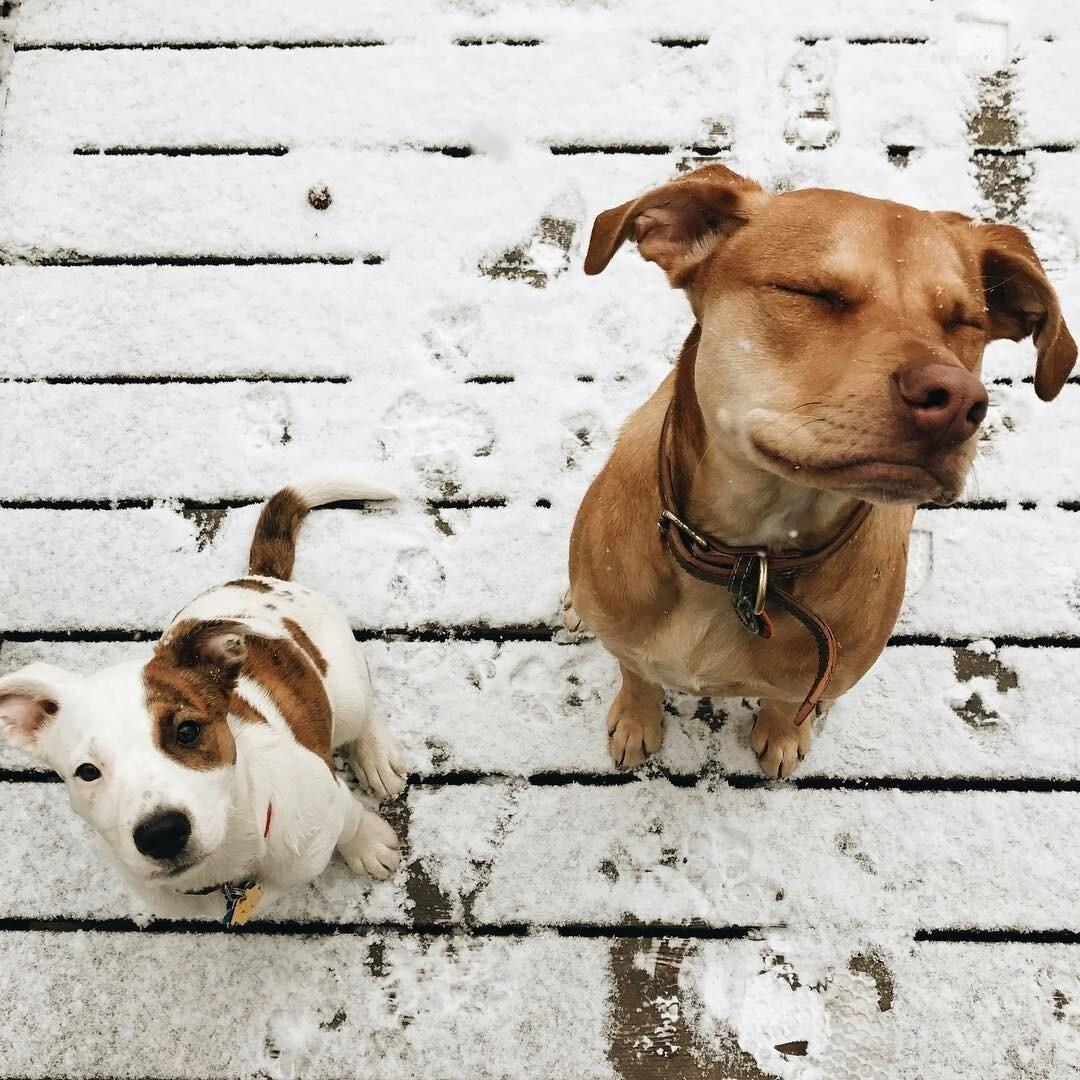 animals, boho, and dogs image