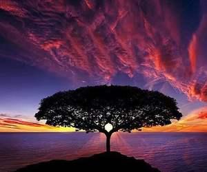 tree, sunset, and nature image