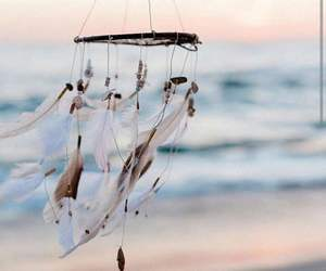 beach, feathers, and photography image
