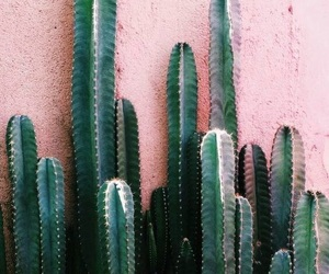 aesthetic, cactus, and pink image